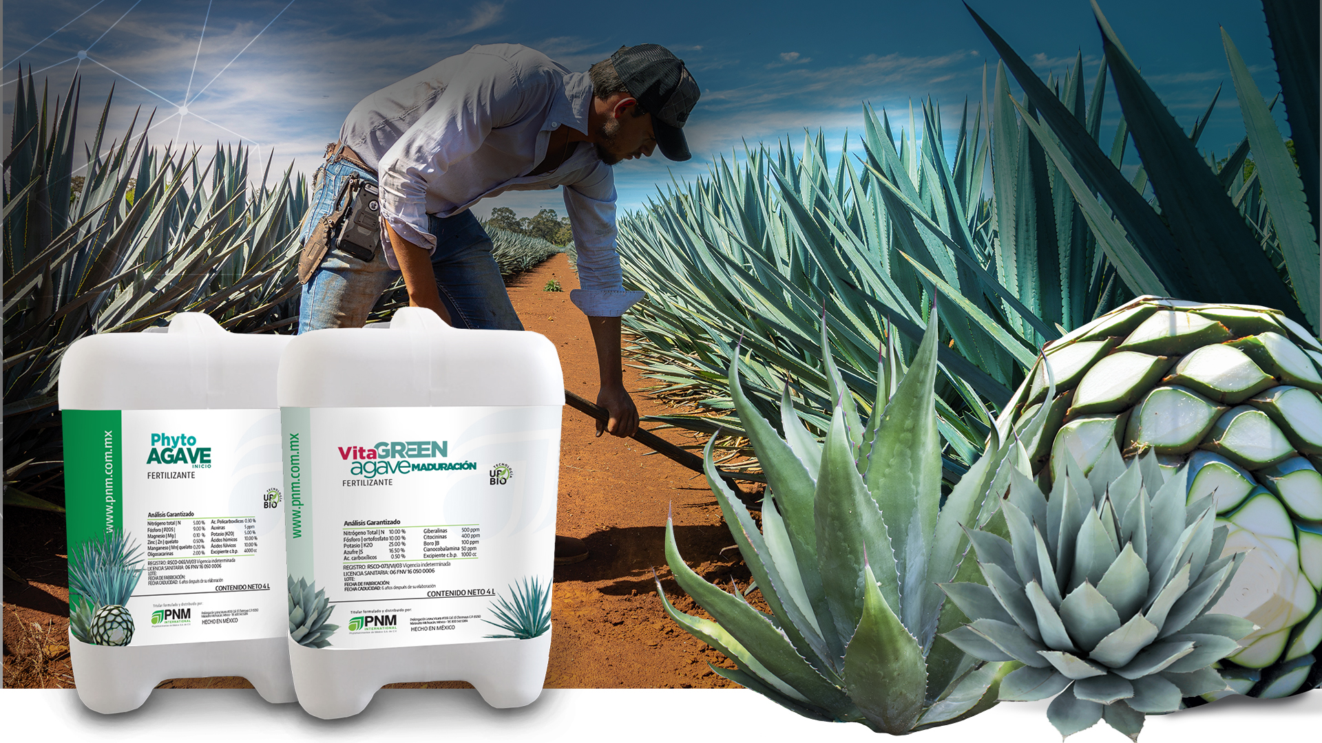 Phyto Agave